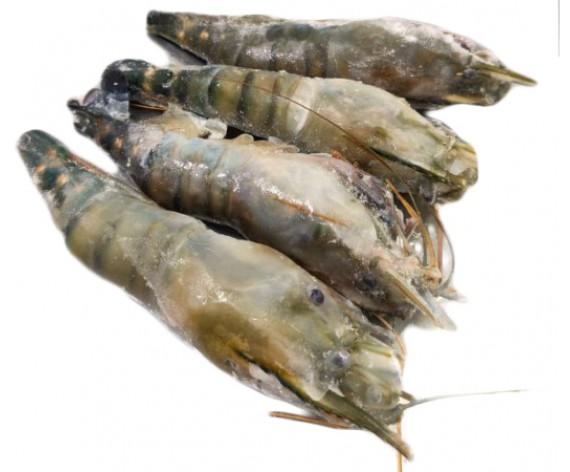 FROZEN FRESH WATER SCAMPI | ±500GM/PKT | 冷冻淡水大头虾 | ID