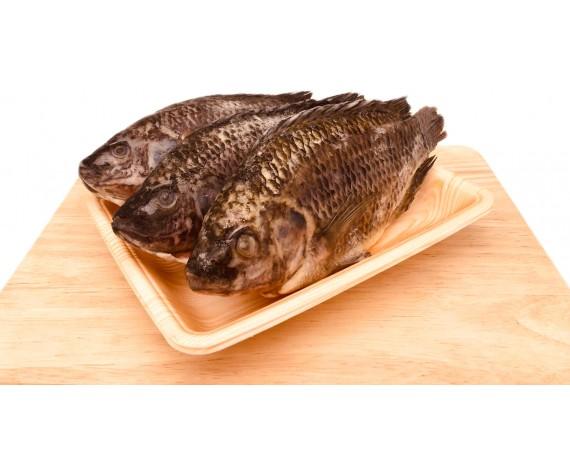 FROZEN TILAPIA FISH | GUTTED | 300-500GM/PC | 3PCS/PKT | 淡水吴郭鱼清肚 | MY