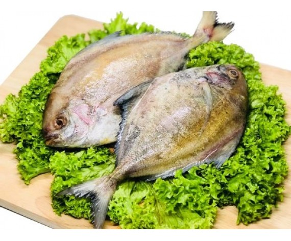 BLACK POMFRET (GUTTED CLEAN) (200-300GM/PC) (±1KG/PKT) 黑鲳(清肚) (MM)